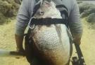 計劃6月中旬到貴州羅甸千島湖釣魚
