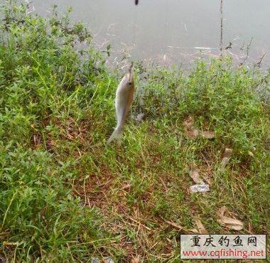 第二条鱼.jpg