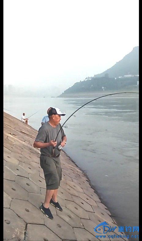 我的左手边是上游,与米级鳡鱼博斗,弯得不能再弯的竿竿