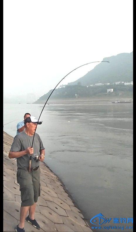 与米级鳡鱼博斗,弯得不能再弯的竿竿