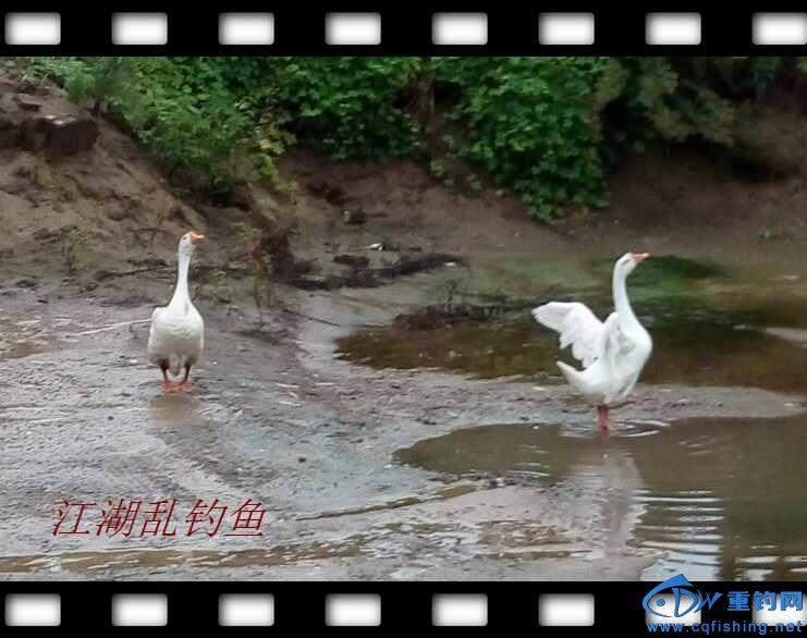 QQ鍥剧墖20160625163619.jpg