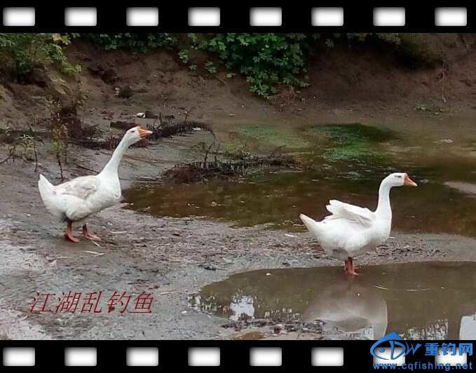 QQ鍥剧墖20160625163719.jpg
