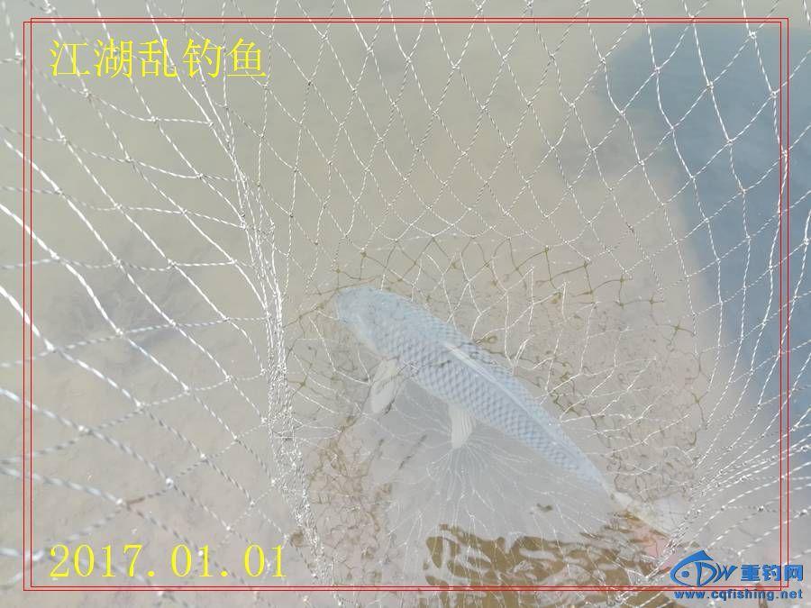 IMG_20170101_132819.jpg