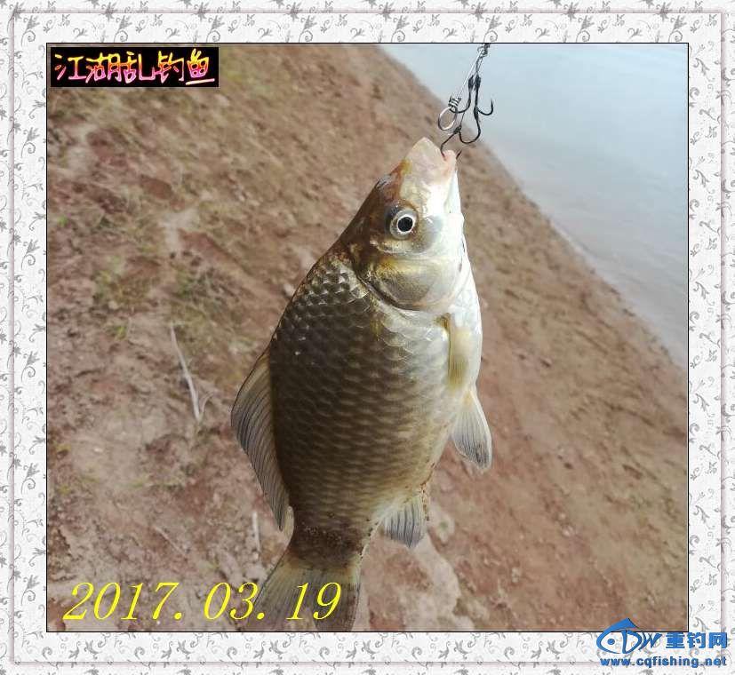 QQ图片20170319230144.jpg