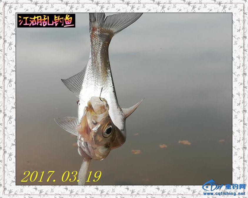 QQ图片20170319230350.jpg