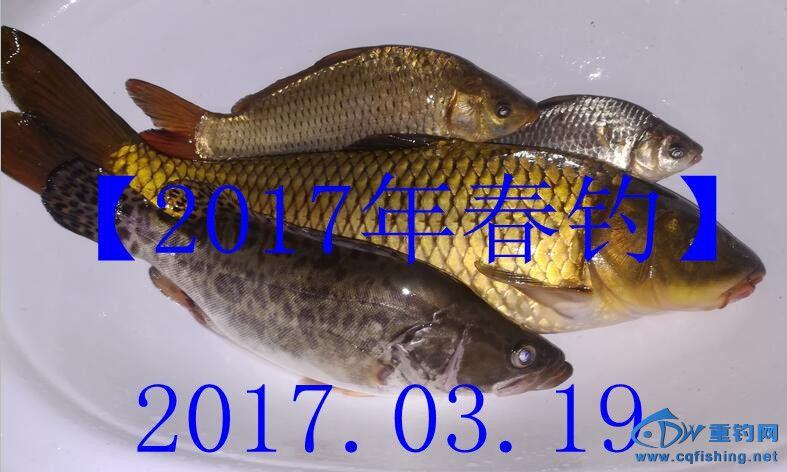 QQ图片20170319233535_副本.jpg