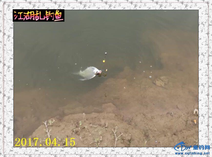 QQ图片20170415215326.jpg