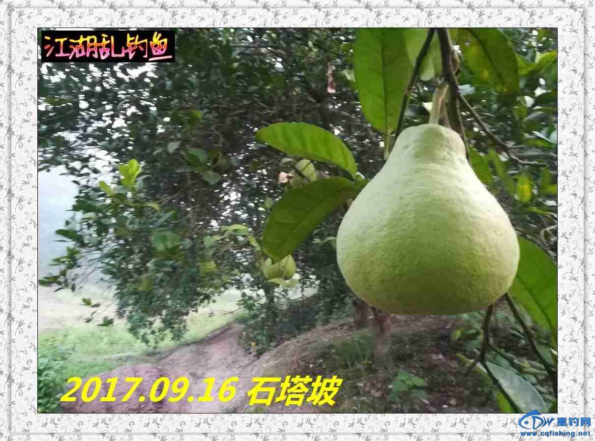 QQ图片20170918213232.jpg