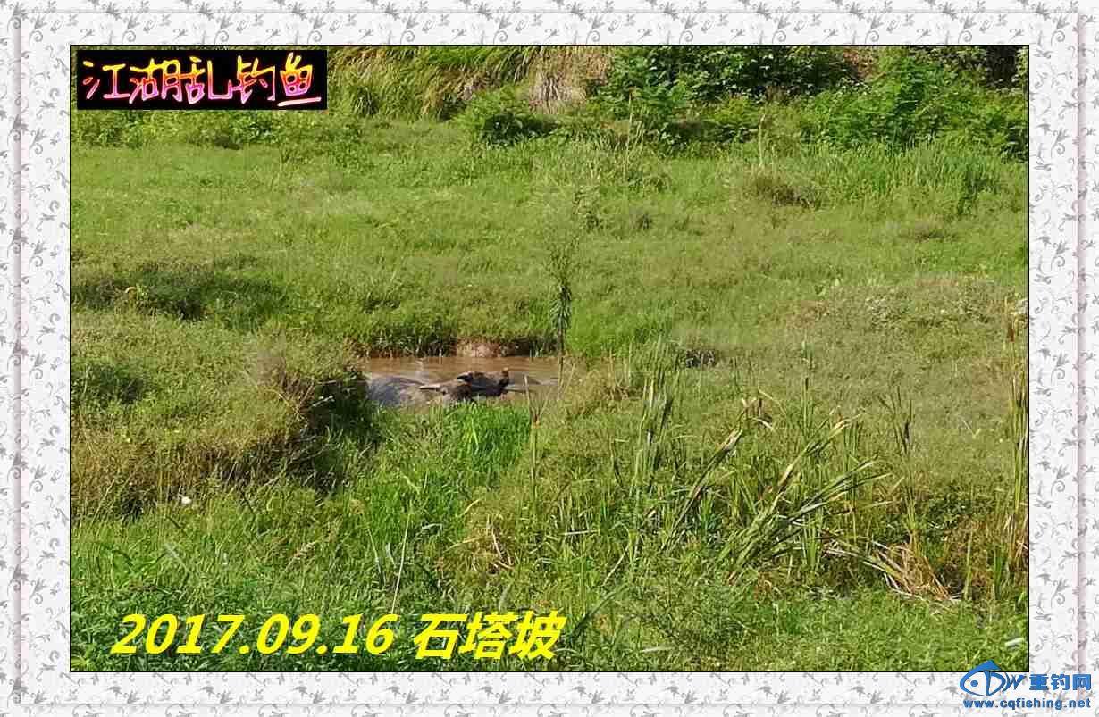 QQ图片20170918214750.jpg