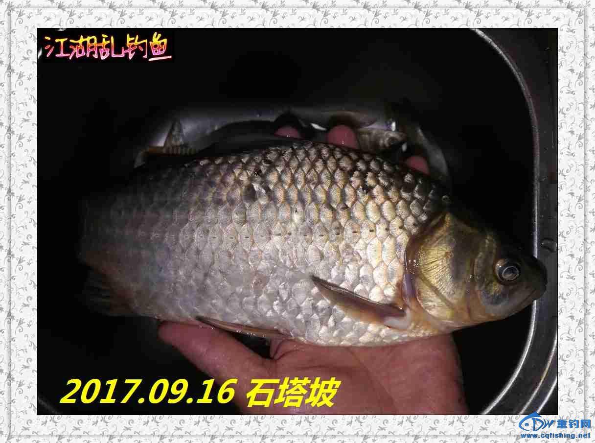 QQ图片20170918215119.jpg