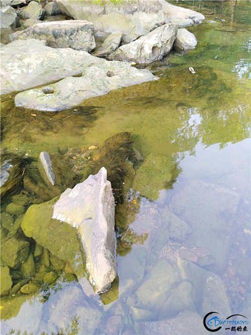 大师们看看这青苔可以不?河中没有鲜绿的青苔,这种青苔拿来淘洗下就成了鲜绿的了。