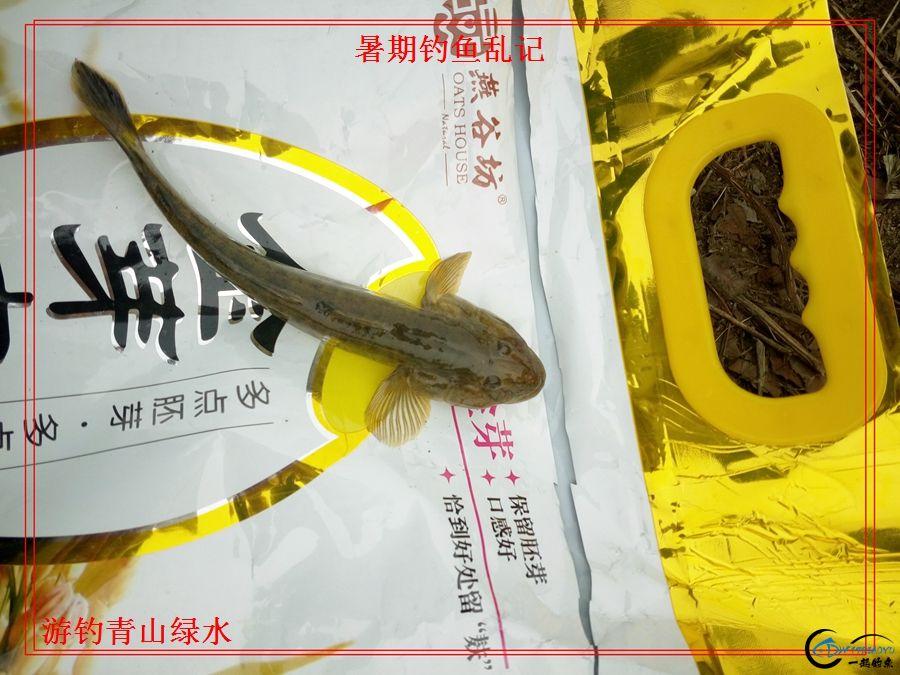 17小鲅鱼(3).jpg
