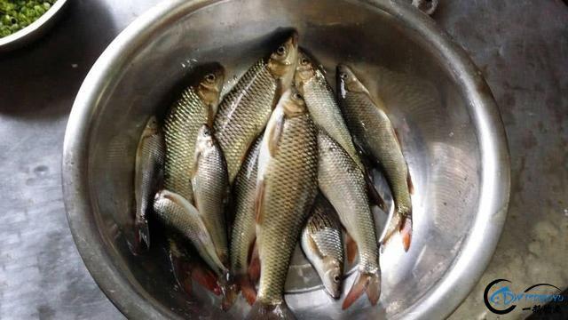 此鱼是西南地区的钓鱼者专属美味,对水质要求极高-20.jpg