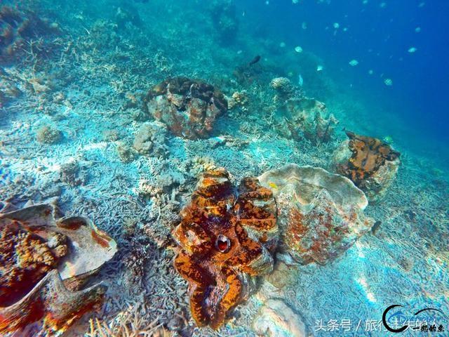 海洋天堂——帕劳-5.jpg