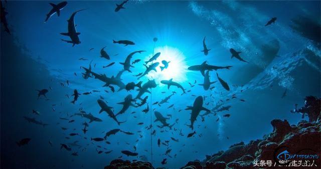 海洋天堂——帕劳-6.jpg