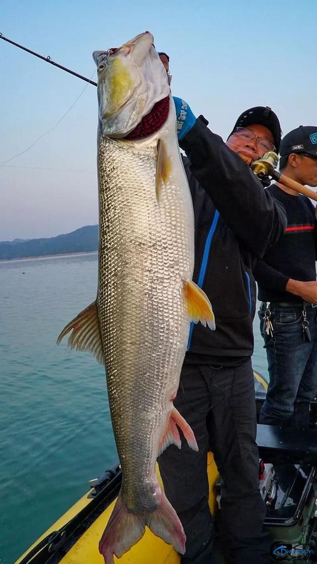 河源寻鳡—深度思考鳡鱼炸水的路亚策略-6.jpg