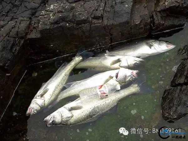 十年路亚江浙沪系列一-4.jpg