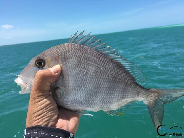 好几斤重的鱼只是被当作鱼饵来用,国内钓鱼人看的咬牙切齿-2.jpg