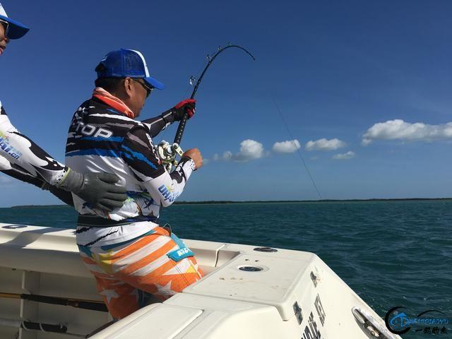 好几斤重的鱼只是被当作鱼饵来用,国内钓鱼人看的咬牙切齿-8.jpg
