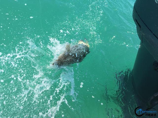 好几斤重的鱼只是被当作鱼饵来用,国内钓鱼人看的咬牙切齿-9.jpg