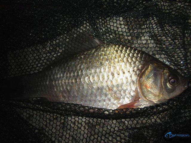乡下人钓鱼,晚上的渔获很丰富-6.jpg