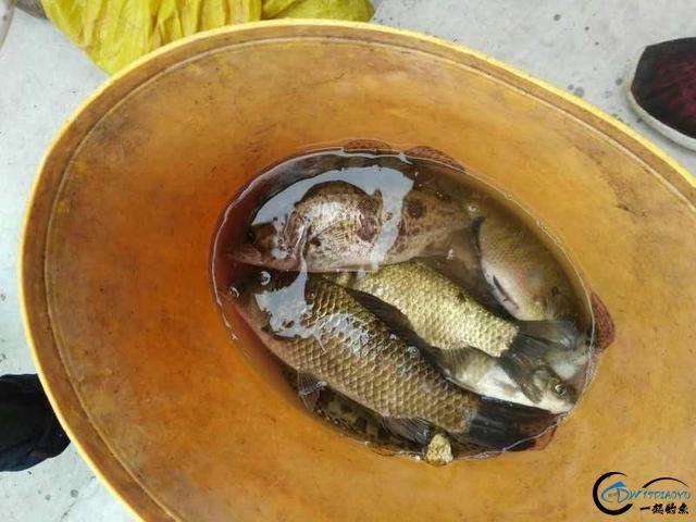 """四川有种鱼叫""""母猪壳"""",长相怪异,味道堪比""""天上的龙肉""""-3.jpg"""