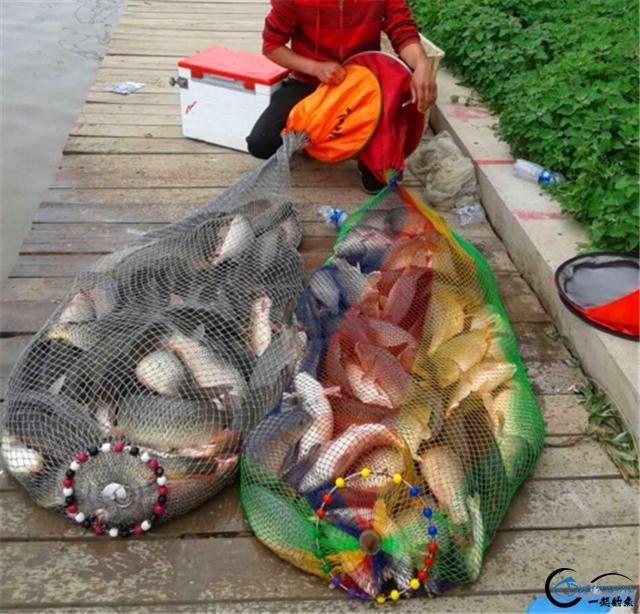 三款诱鱼效果超强的天然小药,钓鲤鱼必备-5.jpg