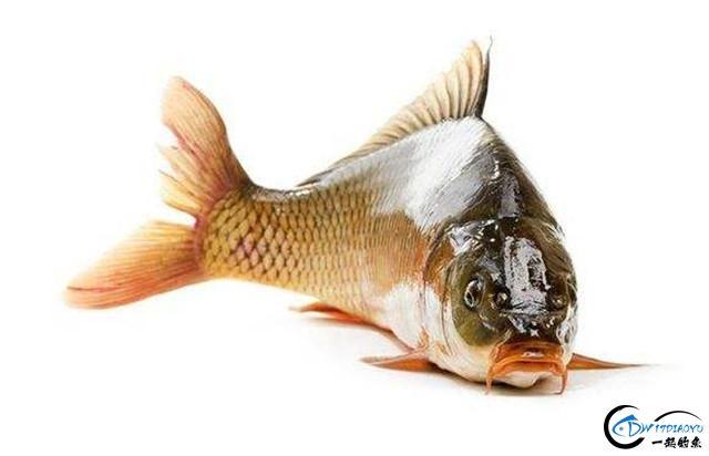 秋季钓鲤鱼的技巧大全,原来鲤鱼索饵最强烈时水温这么高-1.jpg