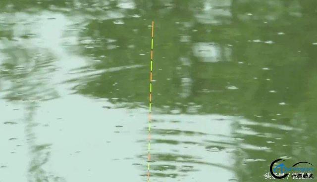 钓鱼看漂小技巧,3分钟学会正确抓口,可提高50%上钩率!-2.jpg