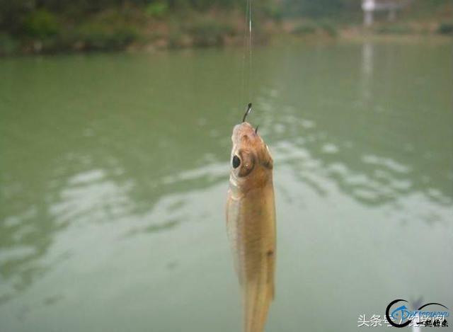 钓鱼看漂小技巧,3分钟学会正确抓口,可提高50%上钩率!-3.jpg