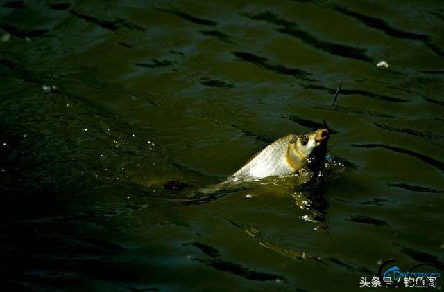 钓鱼看漂小技巧,3分钟学会正确抓口,可提高50%上钩率!-6.jpg