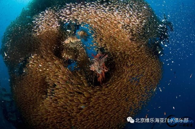 美丽的帕劳浮潜三天出海-1.jpg