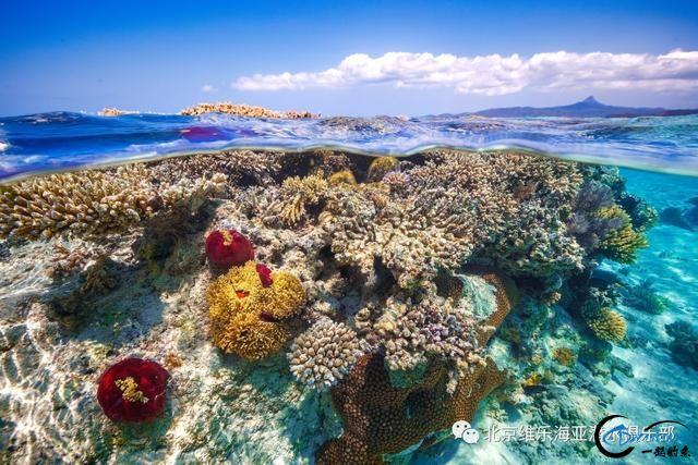 美丽的帕劳浮潜三天出海-5.jpg