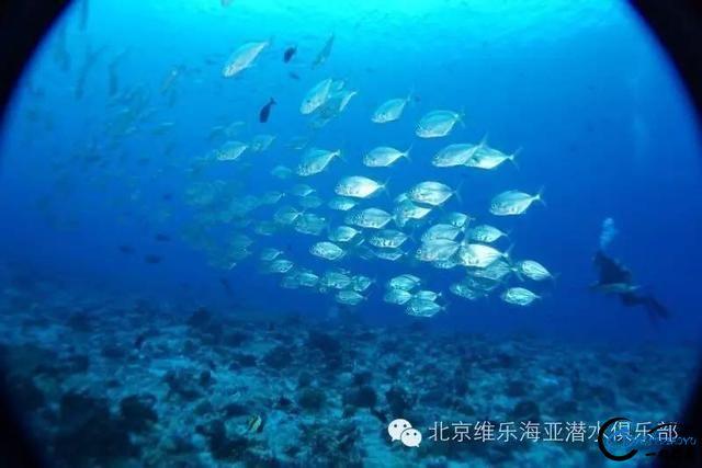 美丽的帕劳浮潜三天出海-10.jpg