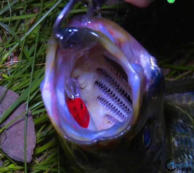 经典教学—翘嘴中钩中鱼的理论分析-1.jpg