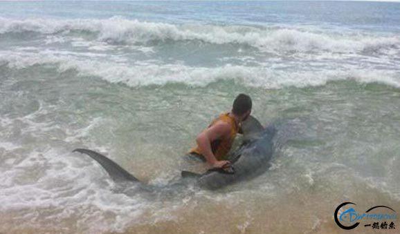 常规的钓鱼已经满足不了这些钓鱼人了,他们已经开始钓鲨鱼了-8.jpg