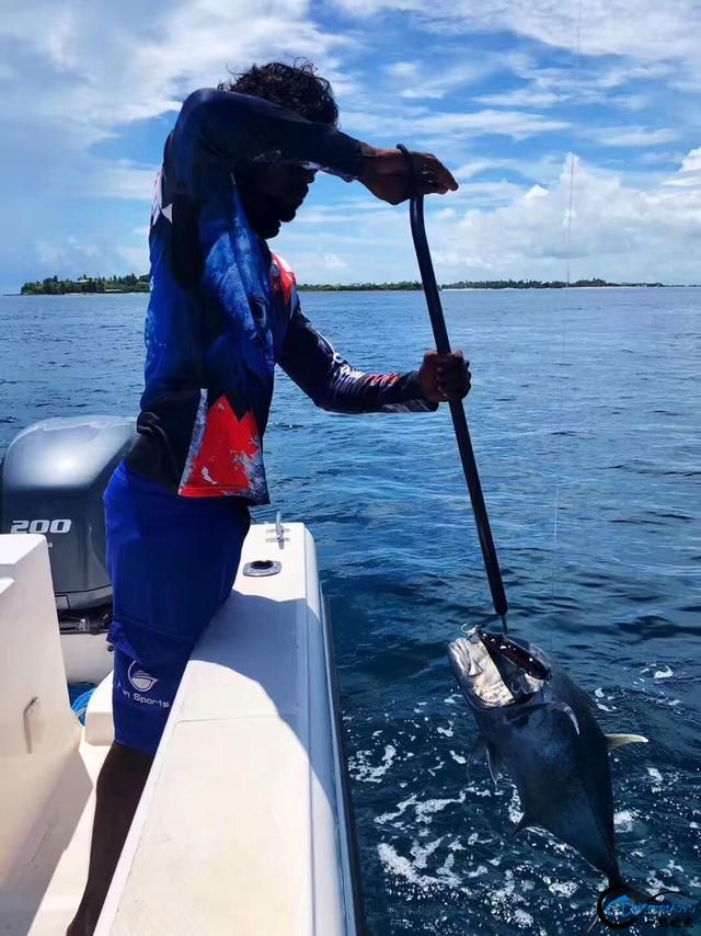 游钓马尔代夫体验了这辈子最疯狂的一次海钓!整个船都钓满了-6.jpg