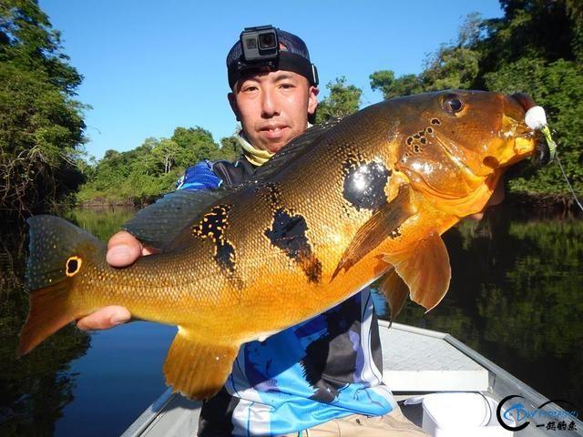 游钓亚马逊钓获巨骨舌鱼后不仅可以烤鱼,鱼皮更能做成皮鞋-4.jpg