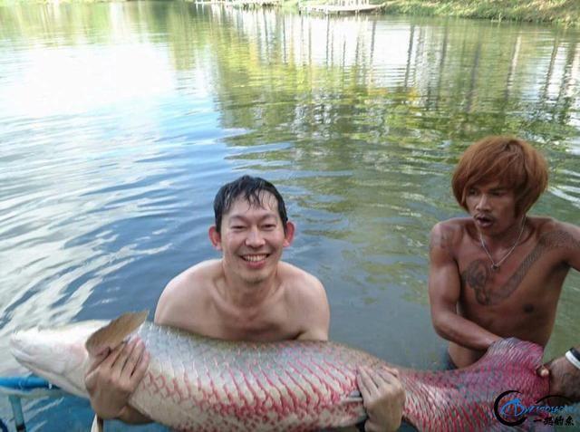 游钓亚马逊钓获巨骨舌鱼后不仅可以烤鱼,鱼皮更能做成皮鞋-12.jpg