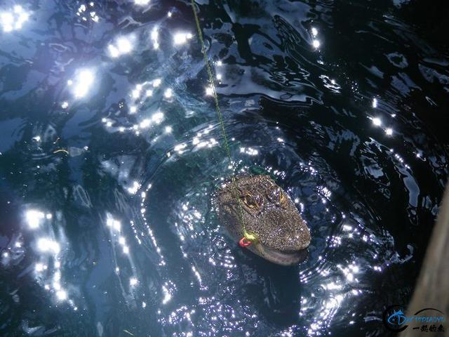 游钓亚马逊钓获巨骨舌鱼后不仅可以烤鱼,鱼皮更能做成皮鞋-10.jpg
