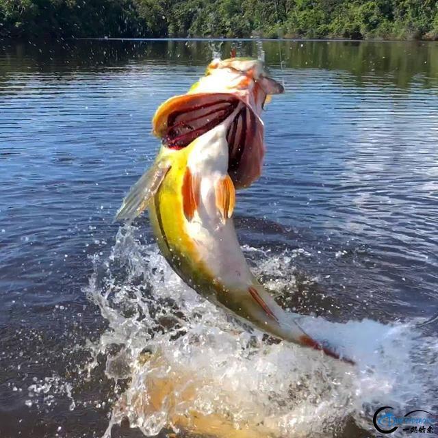 游钓终极钓场亚马逊河,到底该怎么打窝子开什么饵?愁死人了-10.jpg