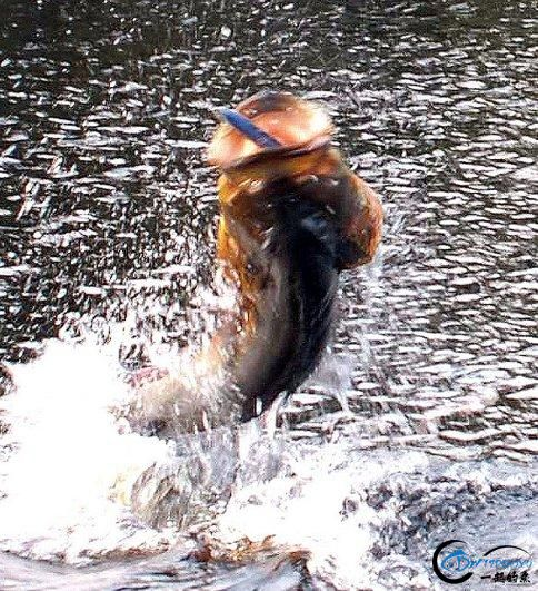 游钓亚马逊的中国钓鱼人,这是用生命在钓鱼啊,渔获真过瘾-4.jpg