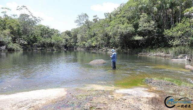 游钓亚马逊的中国钓鱼人,这是用生命在钓鱼啊,渔获真过瘾-1.jpg