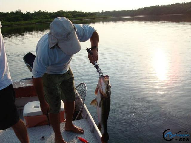 游钓亚马逊的中国钓鱼人,这是用生命在钓鱼啊,渔获真过瘾-12.jpg