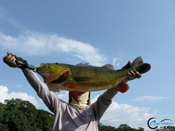 游钓亚马逊的中国钓鱼人,这是用生命在钓鱼啊,渔获真过瘾-14.jpg