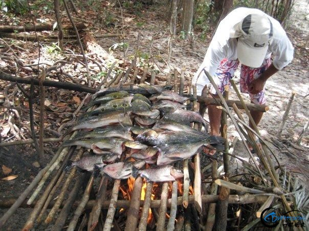 游钓亚马逊的中国钓鱼人,这是用生命在钓鱼啊,渔获真过瘾-19.jpg