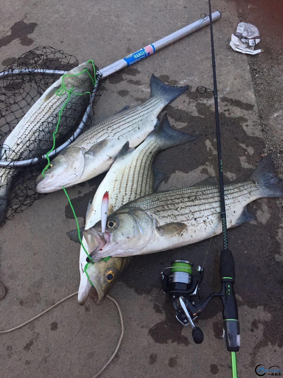 路亚:他们用的什么类型的饵,钓获的这些大鱼?-10.jpg