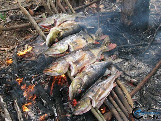 游钓亚马逊河挑战凯门鳄和森蚺,品尝丛林中最为原始的美食-6.jpg