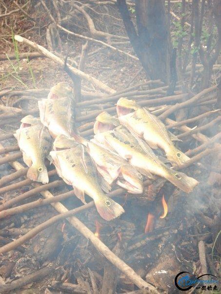 游钓亚马逊河挑战凯门鳄和森蚺,品尝丛林中最为原始的美食-4.jpg
