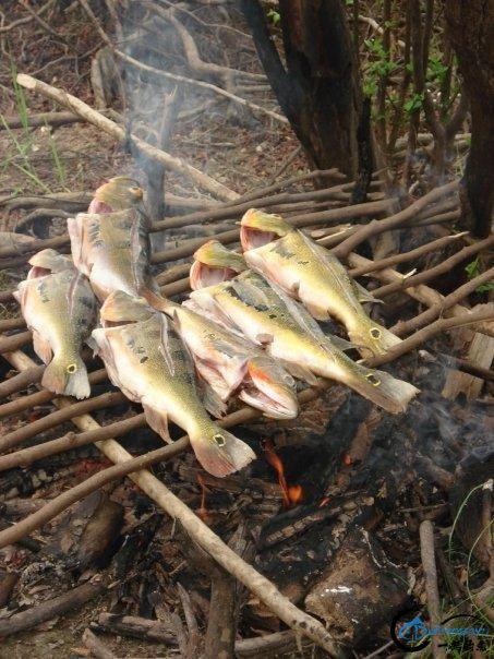 游钓亚马逊河挑战凯门鳄和森蚺,品尝丛林中最为原始的美食-5.jpg